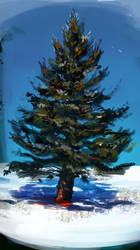 Pine tree by fluffySlipper