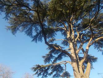 Tall Tree In Glebe Close by FFDP-Neko