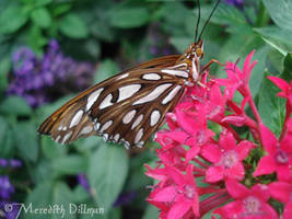 brown and white by MeredithDillman