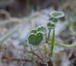 Winter love by buffybot101