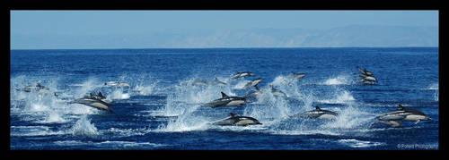 Porpoise Run by truetoform