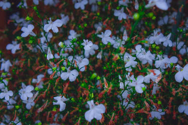 Flowers by guga07