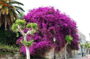 Purple flowers by lastboardingcall