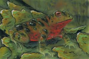 Poisonous acrobatrachus neocen by AlexSone