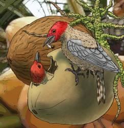 Coconut woodpecker (Cocopicus marinus) by AlexSone