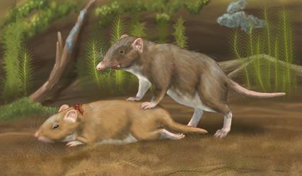 Sabre-toothed shrew (Smilosorex venator) by AlexSone