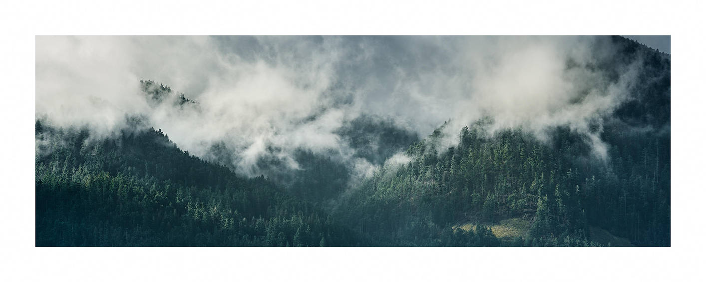 Trees and Mist by sirgerg