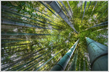Kyoto's Bamboo by Graphylight