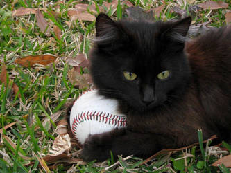 Baseball cat by CaptainIcy