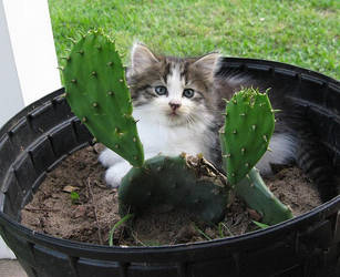 Cactus cat by CaptainIcy