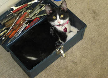Toolbox cat by CaptainIcy