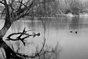 Lakeside by AKrukowska