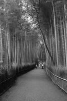 Bamboo Grove by AKrukowska
