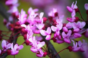 Spring Flowers by AKrukowska