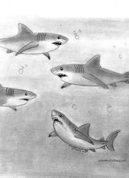 Mmmmm Sharks by DavidFolkie