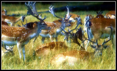 Deers in Burghley House by kanes