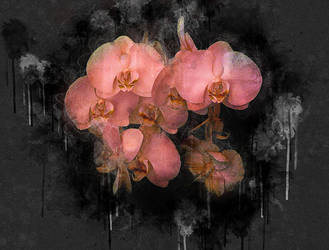 Pink Orchid by kanes