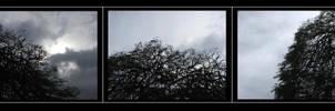 drip drop, tree top by Ginjit