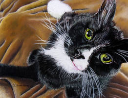 Black cat by devonhants