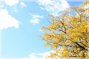 Yellow by Essenze
