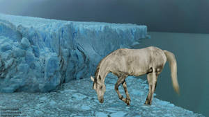 Horse in ice by Sapphires-Graphics