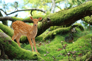 Deer in Forest by Sapphires-Graphics