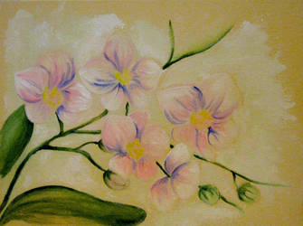 Orchids by Guericke
