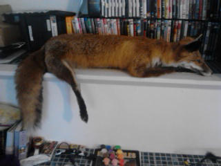 red fox soft mount FOR.SALE by WikkTheFox