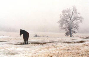 Winter Horse by farscapepilot