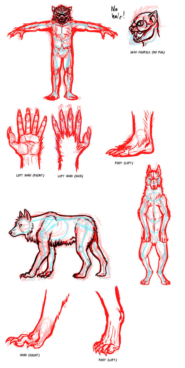 How I Draw Werewolves Character Anatomy Notes By Pandadrake On