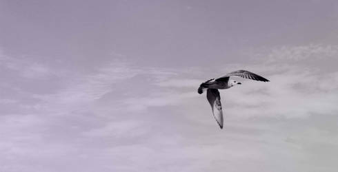 seagull by lady-simple