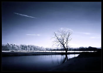 The Lonely Tree at the Lake by nxxos