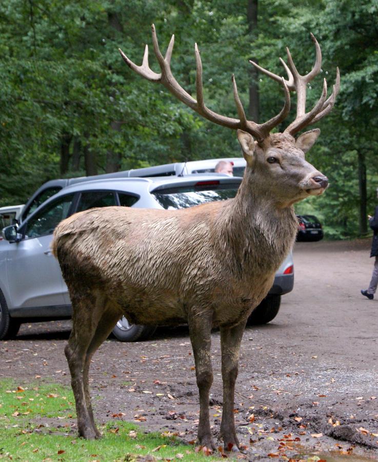 Deer .. 07 by gaothaire