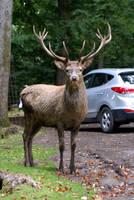 Deer .. 08 by gaothaire