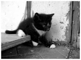 kittykitty by cadhx
