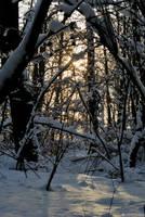 Winter 02 by veruce