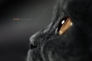 RonzaII by Baadi