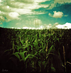 Smells Like Corn Spirit by TLFullerPhotographer