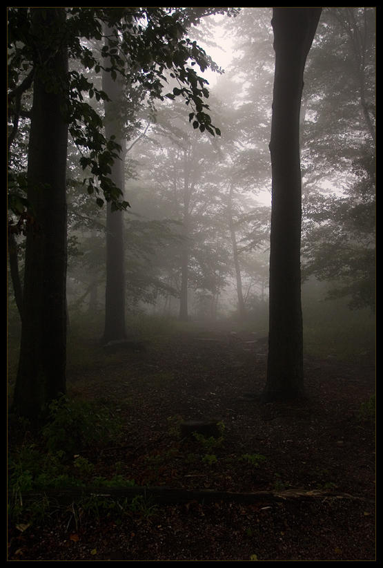silent hill: forest of horror by d3r-t