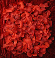 Red Silk Rose Pedals 008 NF by MichaelGBrown