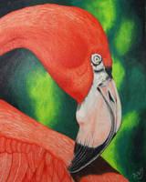 Preening Flamingo by KW-Scott