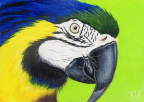 Another Pretty Bird by KW-Scott