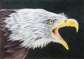 Screamin' Freedom by KW-Scott