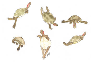 Turtle dance by Tuulisusi