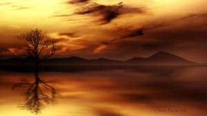 Golden reflections by Ellysiumn