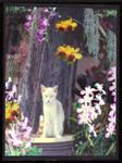 Feral Cat In Orchid Garden by amylynne99