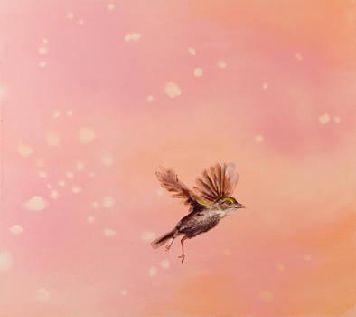 spring blossom - falling by laurenadams