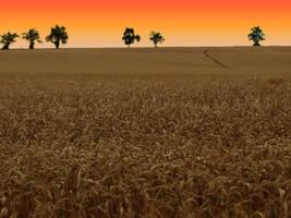 field by Bodghia