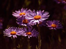 flowers by Bodghia