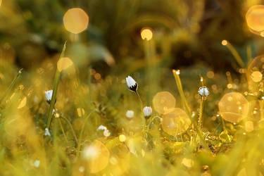 dew by Bodghia